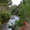 Roadside River Camp