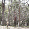 12. 4WD Gum Forest
