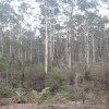 Bushcamping 7. Secluded Glade