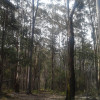 15. 4WD Secluded Forest - Big