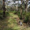 Open bushland