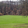 Big paddock site