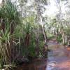 Samson Creek - Bush