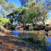 Creek Paddock