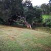 Sarabah Stud Platypus Hole