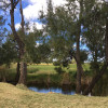 Casuarina Creek - Galbraith