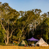 Cabbage Tree Palms-Family Campsite