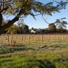 Dorrien Cottage Vineyard
