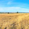 Moriah Farm