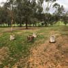 BLACK SHEEP CAMP ONE