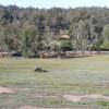 Hervey Bay - Little dam paddock