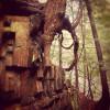 Fort Dummer Campground