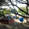 Lupine Camps