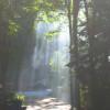 Belfair Main Loop Campground