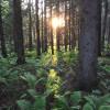 Finland Campground