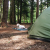 Cook Forest Park Campground
