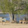 Green River Lake Campground