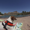 Crabtree Wash Campground