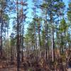 Turkey Fork Recreation Site