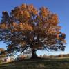 Big Oak Treehouse