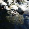 Wild Plum Campground