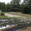 FarmStay Homestead Experience
