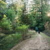 Pond Campsite