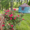 Cherokee Rose Yurt
