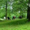 Camping at Galleywinter Farm