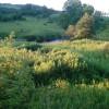 Finger Lakes Land Trust Gem