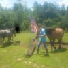 Horse Camping Ranch