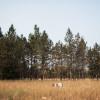 Meadow at Tamarack Grove