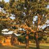 Lake Cisco Lodge and Campground