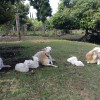 Guacamole sunsets & baby lambs