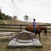 Fantastic Horse Farm