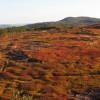 Magnificent View Blueberry Hilltop