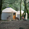 Yurt Glamping in the Forest