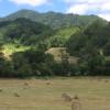 Far Flung Farm