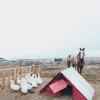 Desert Farm Casita