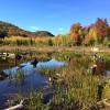 """""""Bear"""" Site Mtn Views/Animals Farm"""