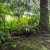 Enchanting Forest Awaits you Site 6