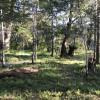 Redwood Castle camp