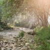Creekside Camping @ Applegate Haven
