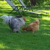 The Funny Farm Joyce Wa