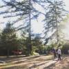 Trillium,124 Acre Forest Wetlands