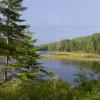 Maine WildWalkWaysONE