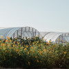 Flower Farm, Rocky Mnt Views!
