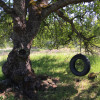 Tree Swing Campsite - GRPF #5