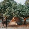 Camp at our farm sanctuary!