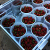 Strawberry Farm Forested Camping-